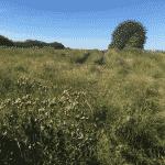 Øster Tørslev Hundeskov