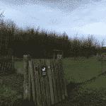 Præstø Hundeskov