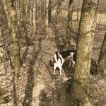 Sebberup Skov - Løsning Hundeskov