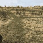 Spørring Hundeskov