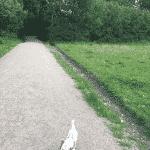 Rødskebølle Hundeskov ved Svendborg