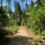 Nordskov Hundeskov ved Silkeborg