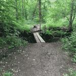 Jyderups hundeskov i Dyremoseskoven
