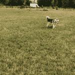 Greve Hundeskov