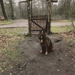 Lindet Skov ved Toftlund