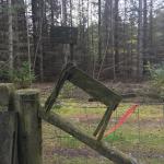 Læsø Klitplantage Hundeskov