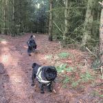 Faddersbøl hundeskov ved Thisted