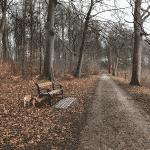 Hørsholm Slotshave Hundeskov