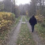 Kiskelund Plantage Hundeskov