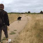 Kattebjerg Hundeskov også kendt som Allesø hundeskov
