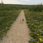 Rønnebæk Hundeskov ved Næstved
