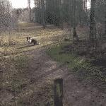 Snejbjerg hundeskov ved Herning