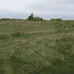 Nordskoven Slagelse Hundeskov