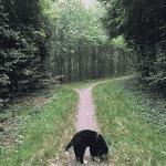 Kirkendrup Skov (hundeskov)