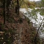 Kobskov hundeskov ved Almindsø ved Silkeborg og Them