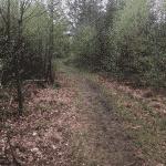 Renbæk Plantage hundeskov