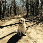 Teglstrup Hegn Hundeskov