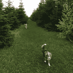 Dalmose Hundeskov