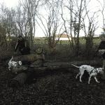 Sludstrup hundeskov