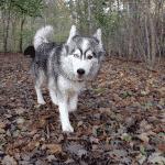 Tølløse Hundeskov