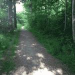Årslev Skov ved Brabrand / Århus