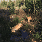 Tranum hundeskov i Langdal Plantage