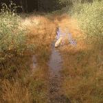 Vilsbøl Klitplantage Hundeskov