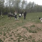 Randal Skov - Hundeskov