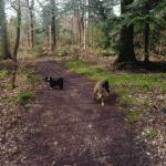 Kongelunden Hundeskov (Rosenlunden)