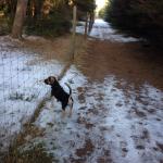 Oksby Hundeskov (Blåvand)
