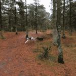 Kollerup Plantage Hundeskov nord for Fjerritslev