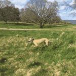 Moesgård Skov (hundeskov)