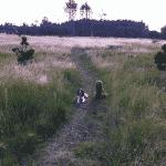 Hundeskov ved Den Tilsandede Kirke ved Skagen