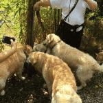 Nibsbjerg Plantage Hundeskov ved Holstebro