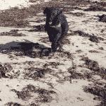 Feddet ved Brydegård hundepark / hundestrand