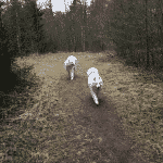 Ål Plantage (Oksbøl Hundeskov)