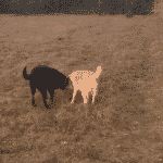 Mosbjerg Hundeskov