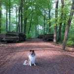 Ravnsholt Skov - hundeskov ved Allerød
