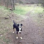Resenbro Krydset hundeskov