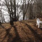 Dollerup Bakker Hundeskov