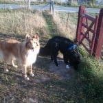 Hundeskov i Benløseskoven ved Ringsted