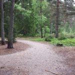 Kallehave Skov (hundeskov) ved Ry