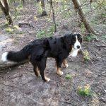 Høng Skov (hundeskov)