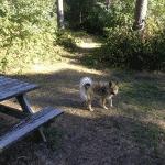 Flyvesandet Hundeskov
