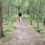 Hammer Bakker hundeskov