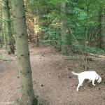 Sollerup Hundeskov
