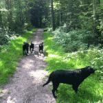 Madeskov (hundeskov) ved Sønderborg