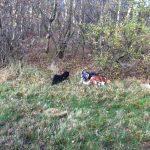 Knudmosens Hundeskov ved Herning