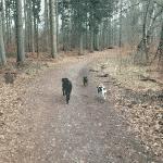 Bistrup Hegn Hundeskov