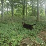 Præsteskov Hundeskov